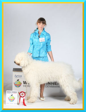 Komondor - young female Dáridó Fehér Kócos - World Junior Winner