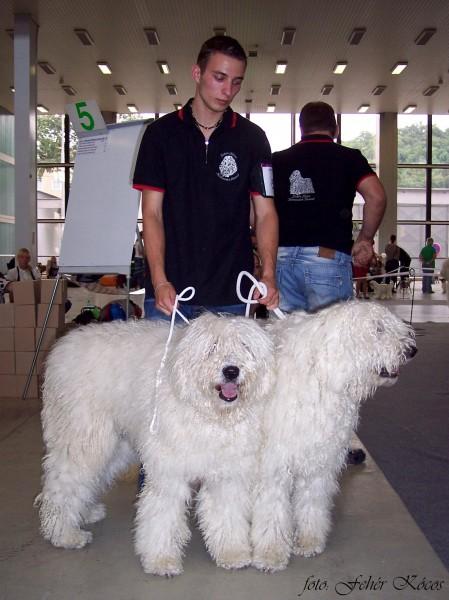 Ivan s Erisz a Elektrou Fehér Kócos