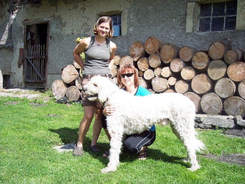 Bárány Fehér Kócos - jeho psí kamarádka je momentálně zavřená, Baryk má důležitou povinnost - hlídá, ona mu slečinka totiž hárá...