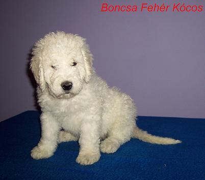 Boncsa 7 weeks