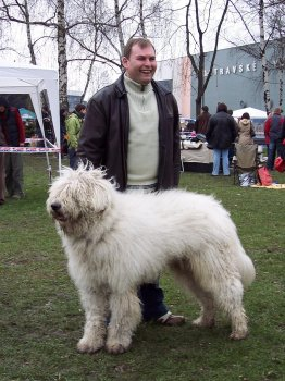 Cerberus s majitelem před vystavováním na klubové výstavě v Ostravě