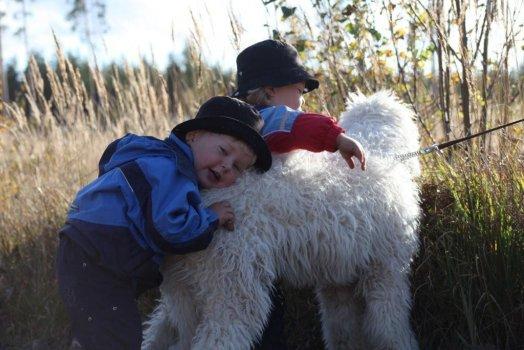 Csárdás a děti Suski na procházce v lese