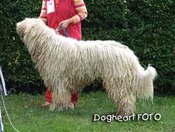 Döme von Thüringen, breeder Edit Wagner, owner Bärbel Kloss