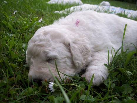 Na zahrádce se taky prima spí