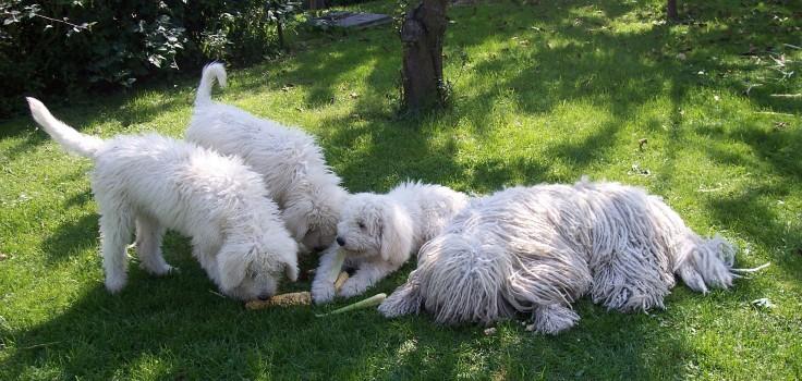 Tříměsíční Elektra, Erisz a Estillka s mámou Vattou