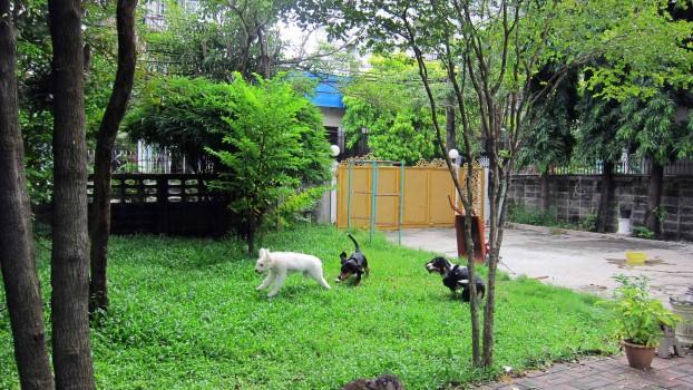 Felicita žije ve své thajské rodině společně i s dvěma basetkami
